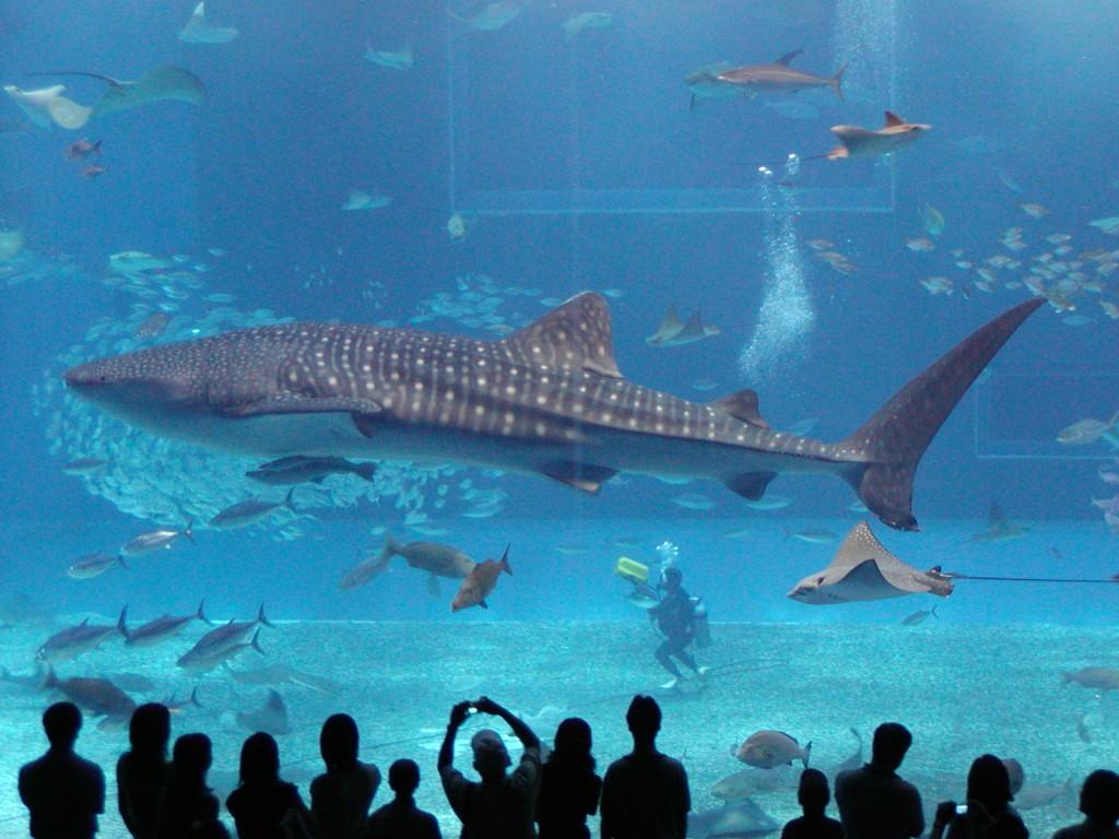 ... del quale il Churaumi Aquarium è solo una delle molte attrattive